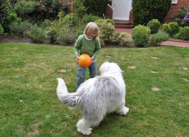 chien comme animal de compagnie
